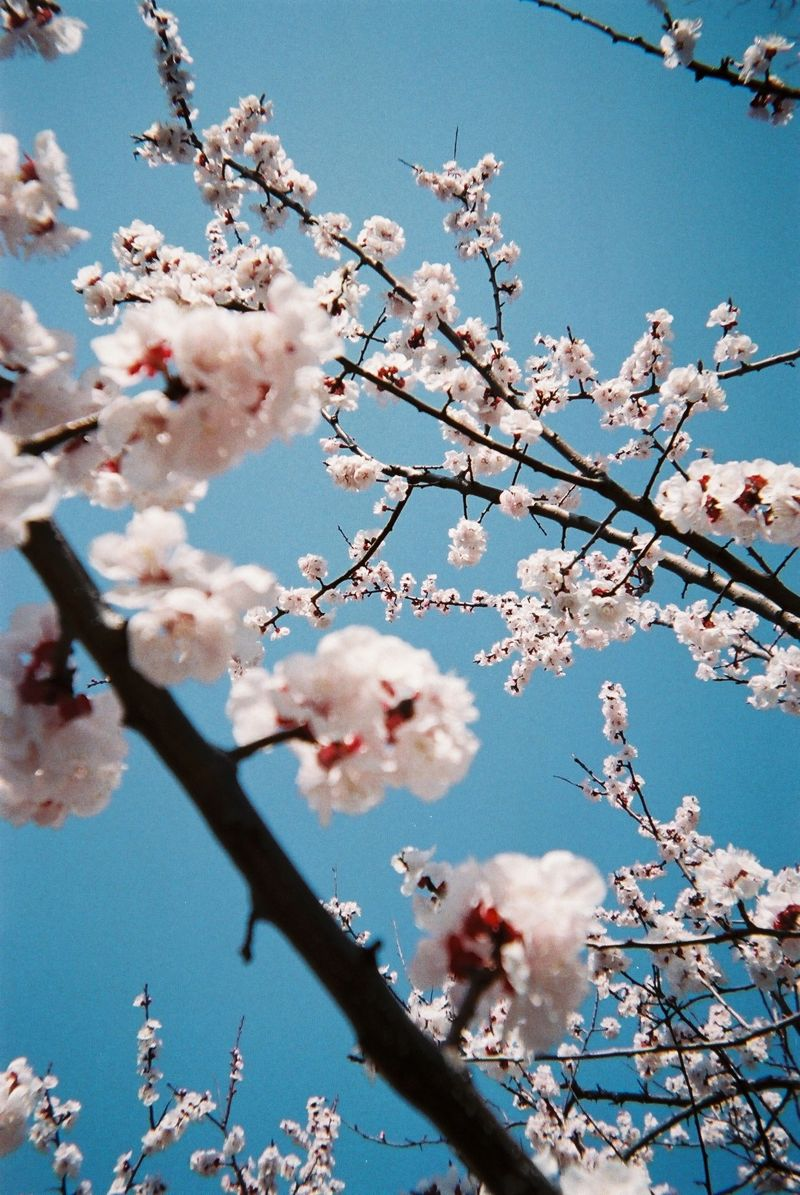 Disposable Lives photos of Japan by dan bailey 04